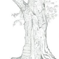 木のデッサン
