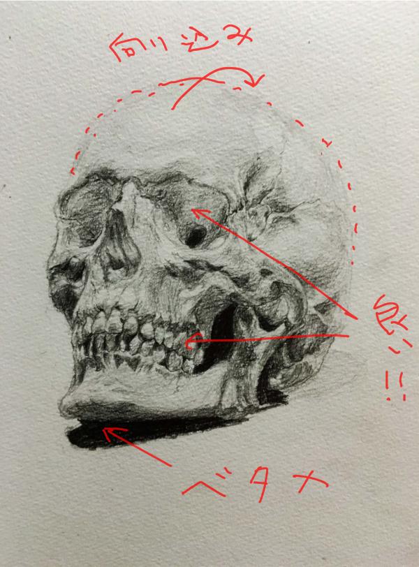 頭蓋骨のデッサン