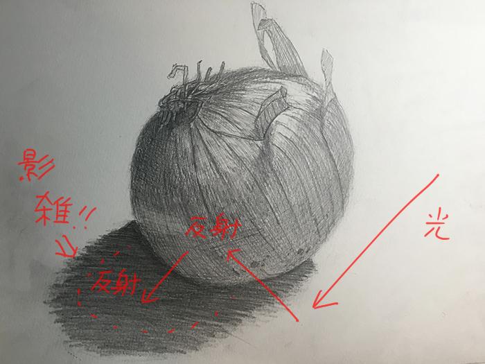 タマネギのデッサン